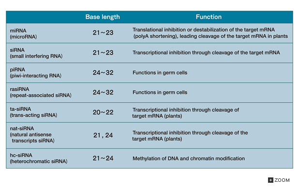 column table 10 3 functional small rna identified till date in various species