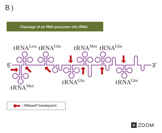 8 3 post transcriptional modification introduction to life science