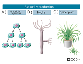 Form asexual reproduction