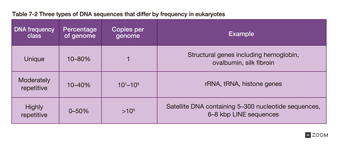 Table 7-2 Three types of DNA sequences found in eukaryote with different  frequency
